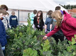 Students inspecting broccoli